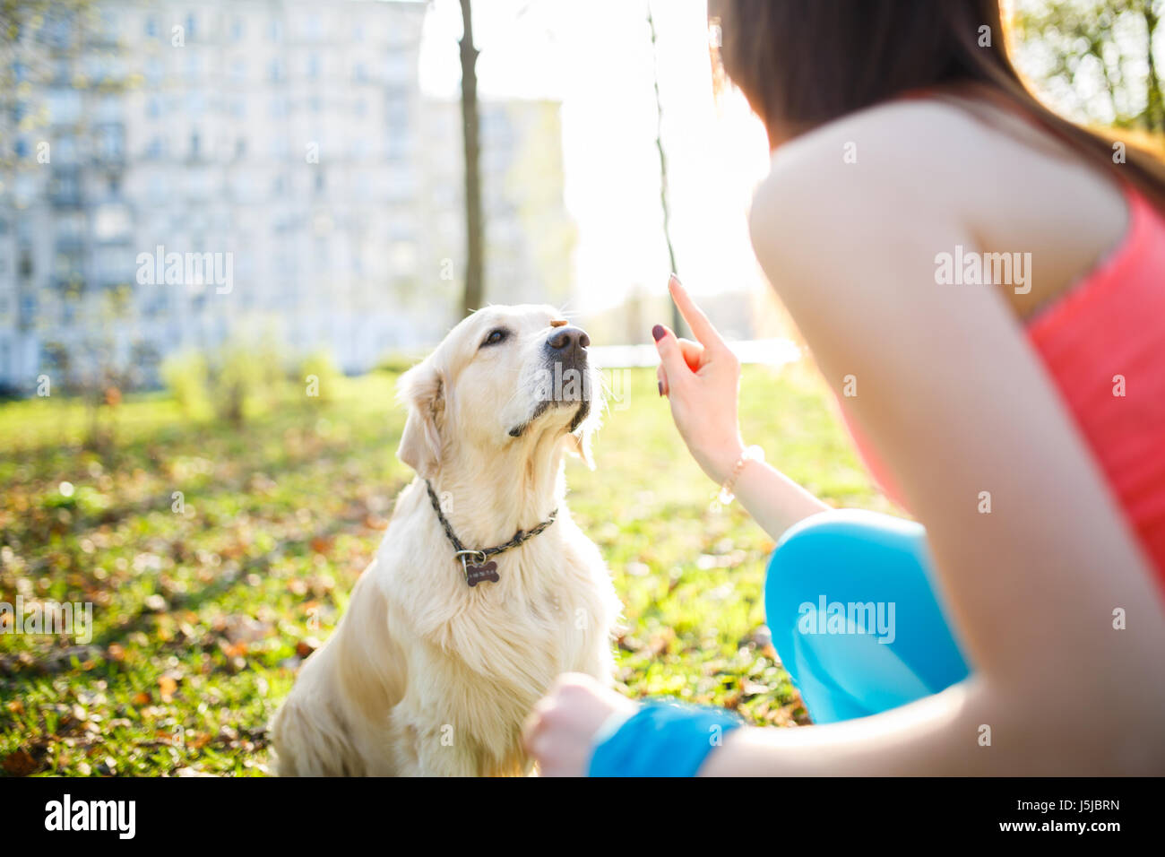 Girl training dog at park - Stock Image