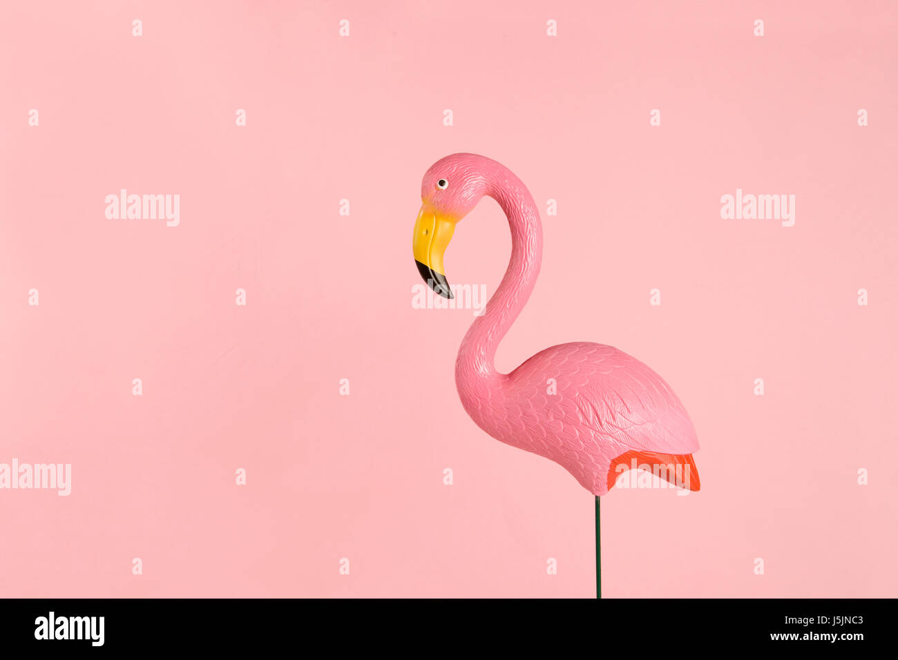 a pink plastic flamingo on a pink background. gradient and tones on tones - Stock Image