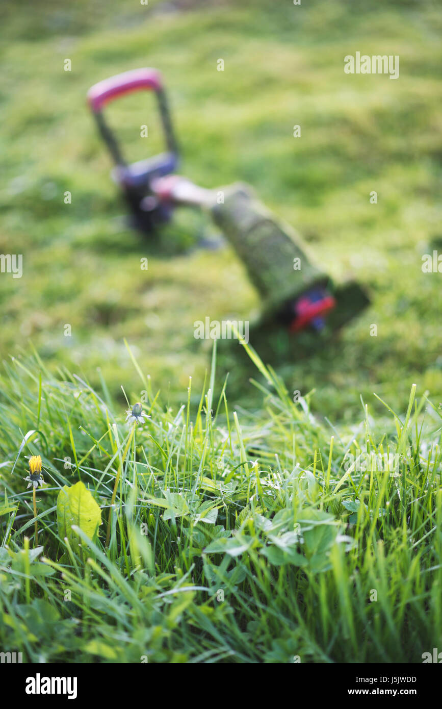 String trimmer lies on mown lawn middle of the yard, tool - Stock Image