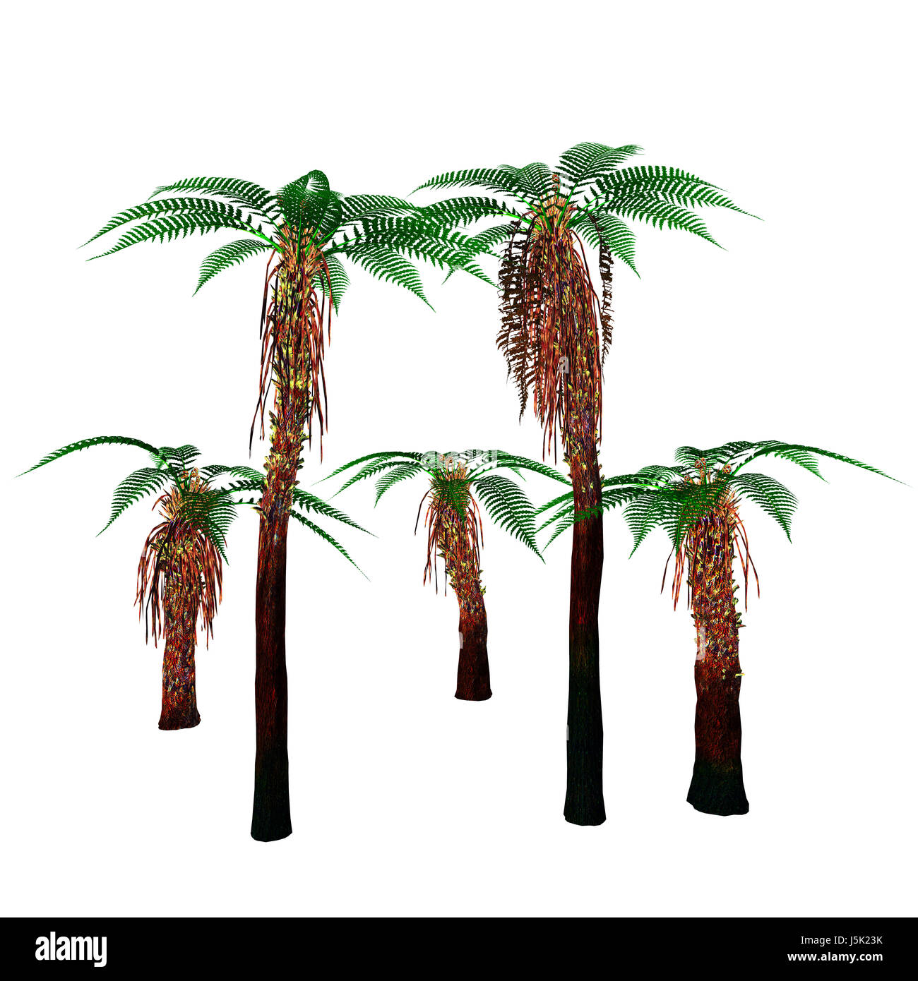 Dicksonia Trees - Dicksonia antarctica is an evergreen tree native to Australia and Tasmania. - Stock Image
