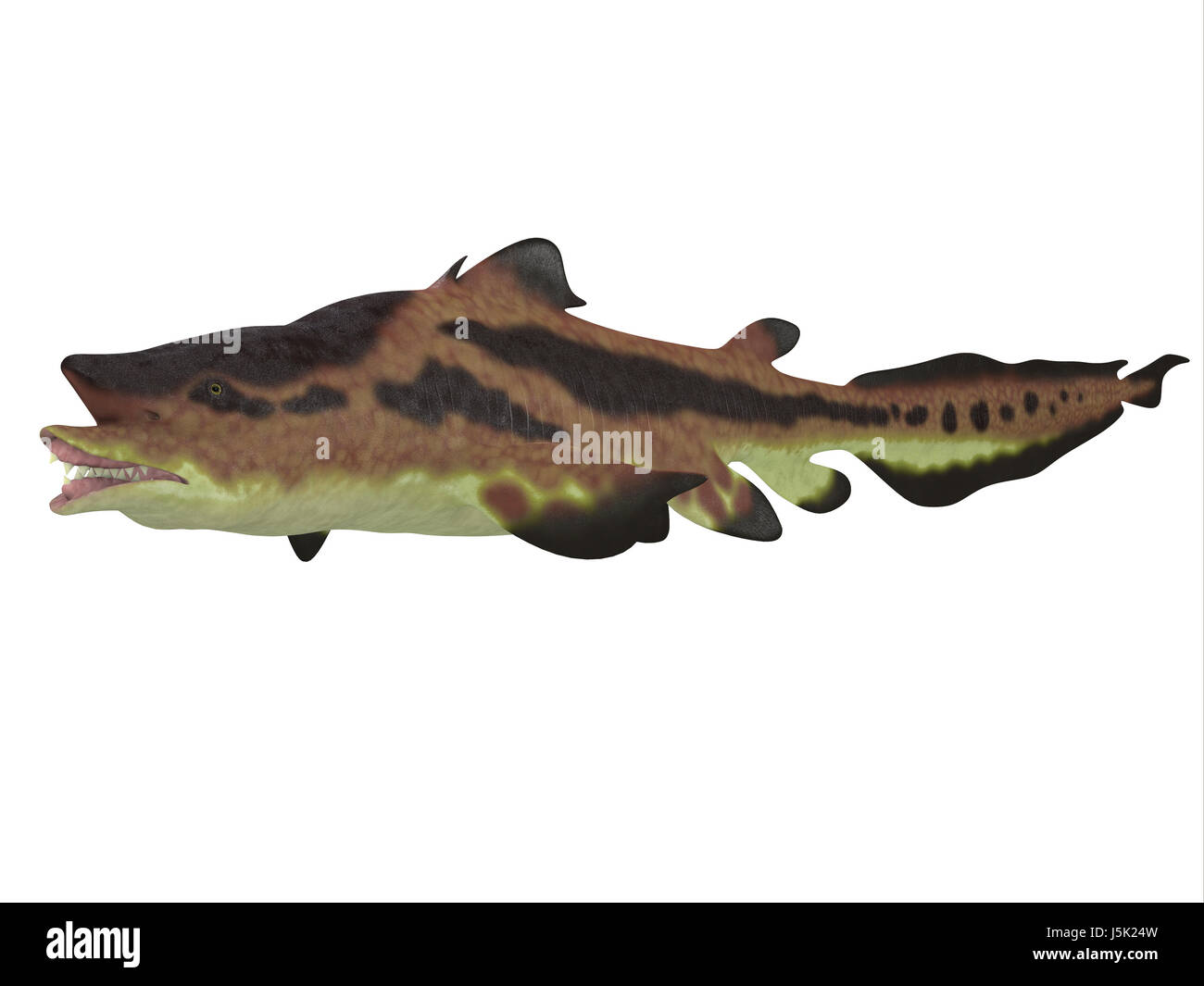 Edestus shark lived in seas of the Carboniferous Period in North America, England and Russia. Stock Photo