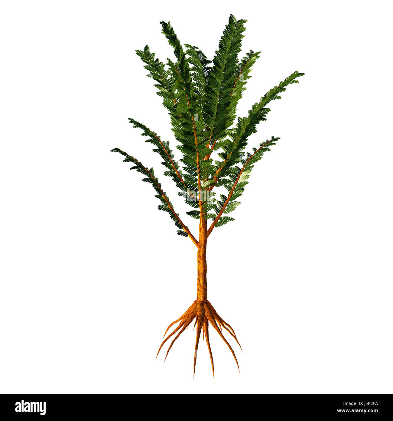 Pachypteris sp Tree - Pachypteris lived during the Mesozoic Era as a low growing plant with a woody trunk and was - Stock Image