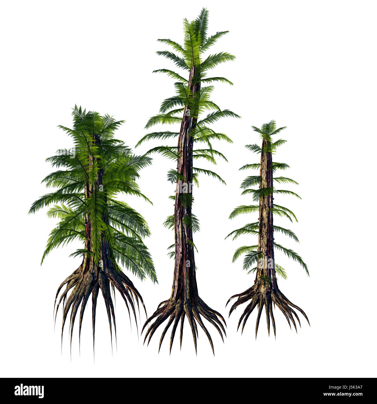 Tempskya is an extinct genus of tree-like fern that lived during the Cretaceous Period. - Stock Image