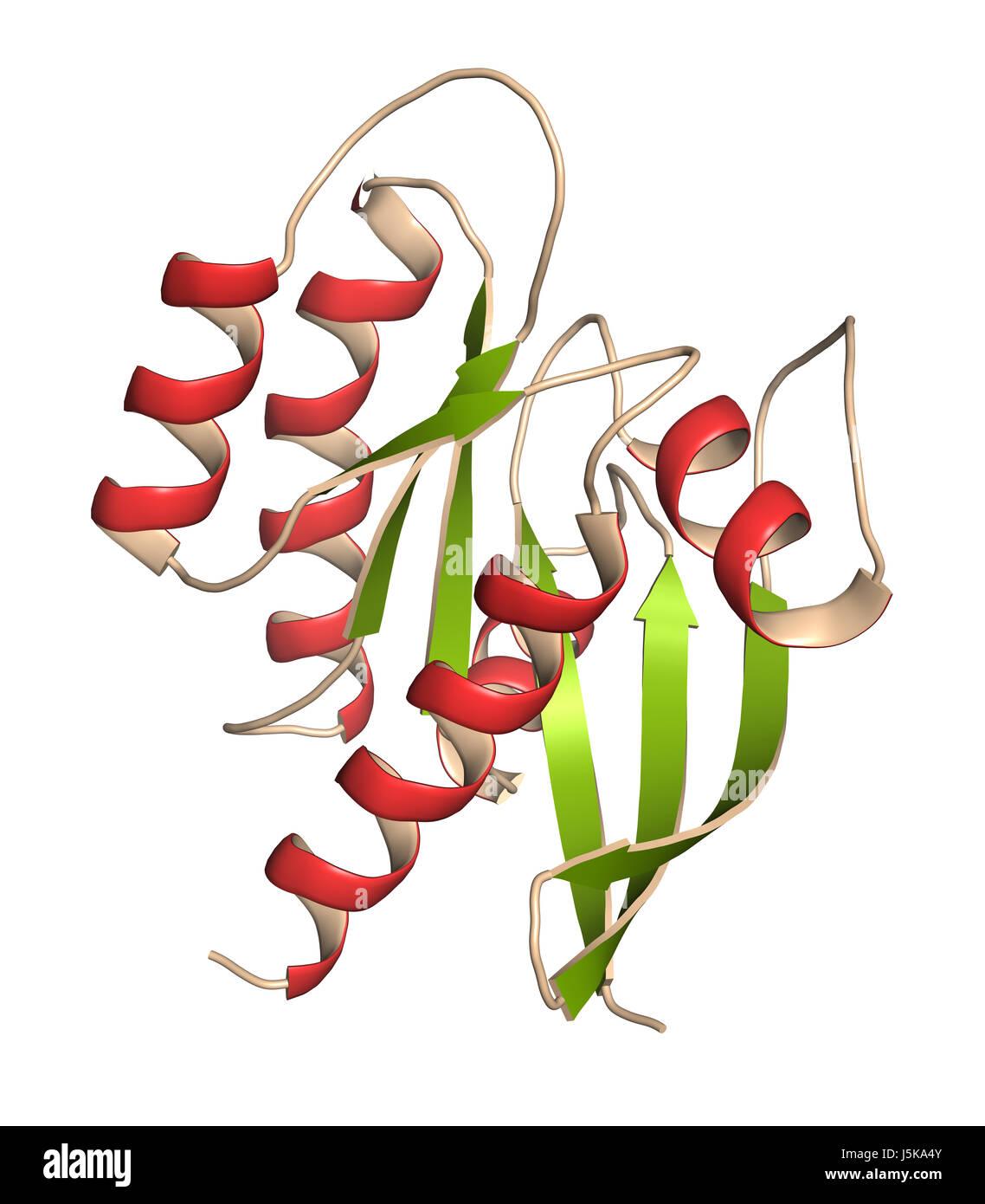 KRAS (Kirsten rat sarcoma viral oncogene homolog, fragment) protein. 3D rendering based on protein data bank entry - Stock Image