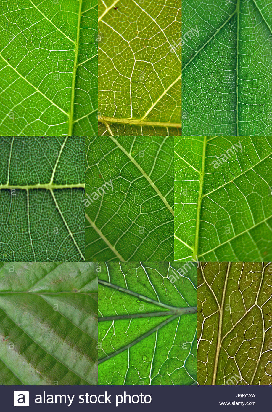 leaf,green,collage,collection,compilation,blatt-collage,blttersammlung - Stock Image