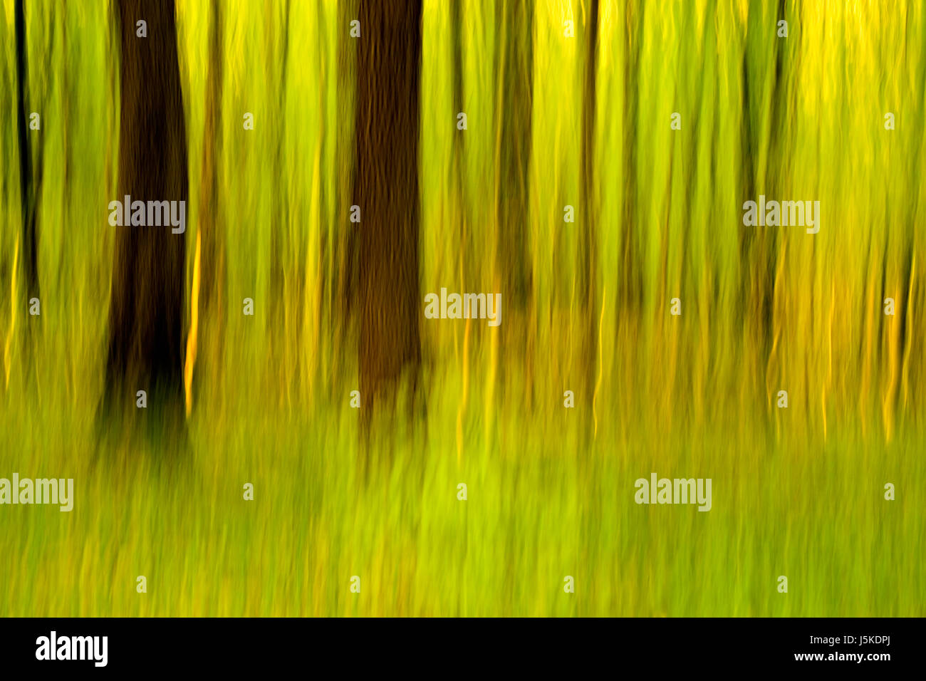 tree fluent green spring ambiguous habitat greenish yellowish vertical - Stock Image