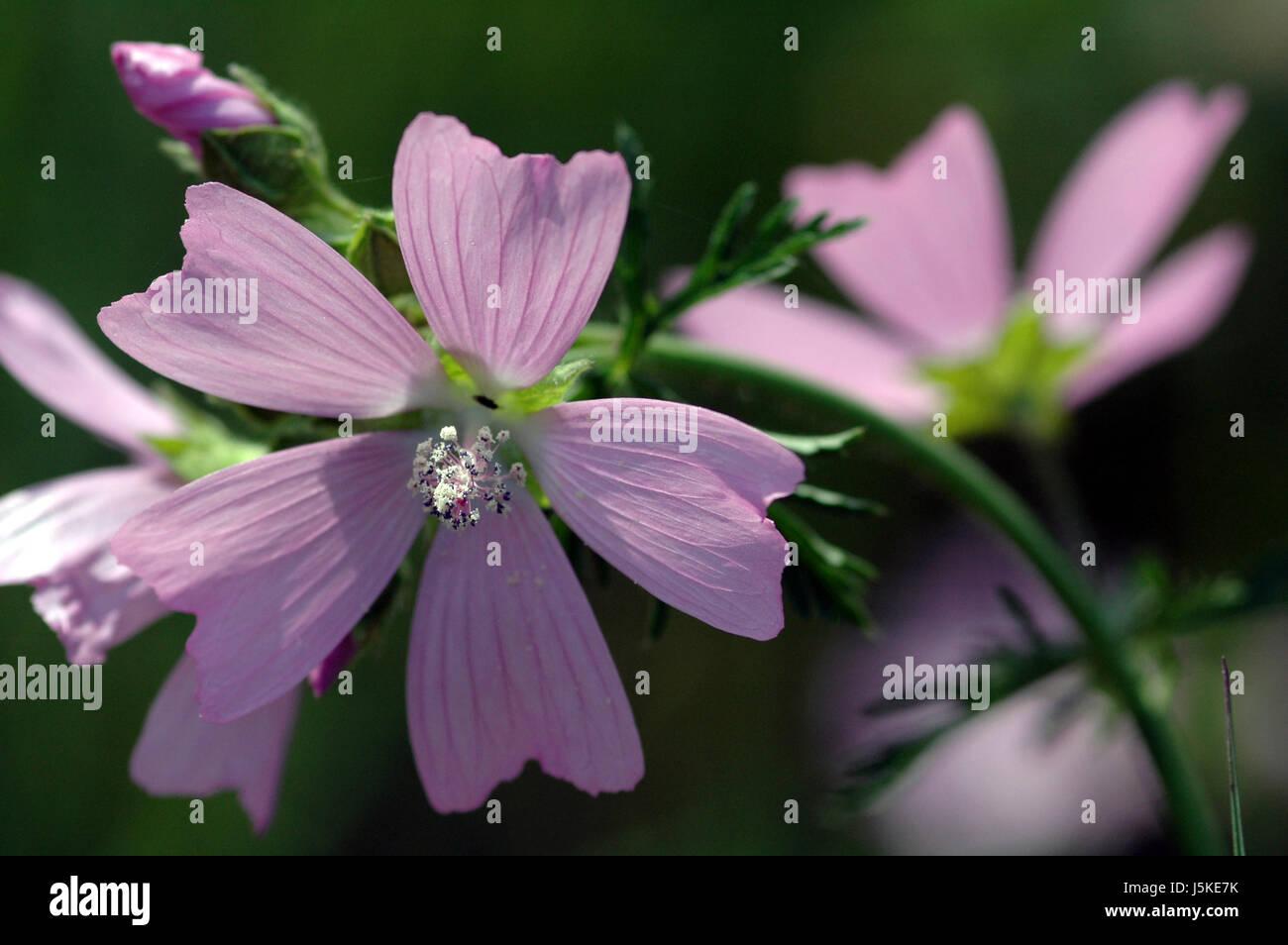 glass chalice tumbler plant bloom blossom flourish flourishing leaves botany Stock Photo