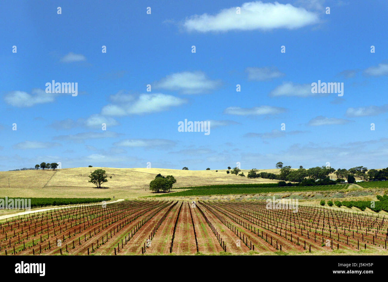 Beautiful landscapes at the Barossa valley in South Australia. - Stock Image