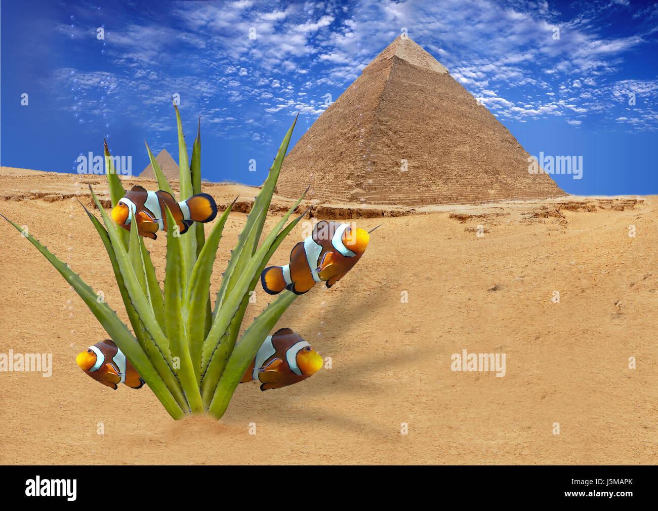 blue life exist existence living lives desert wasteland fantasy heat cactus Stock Photo
