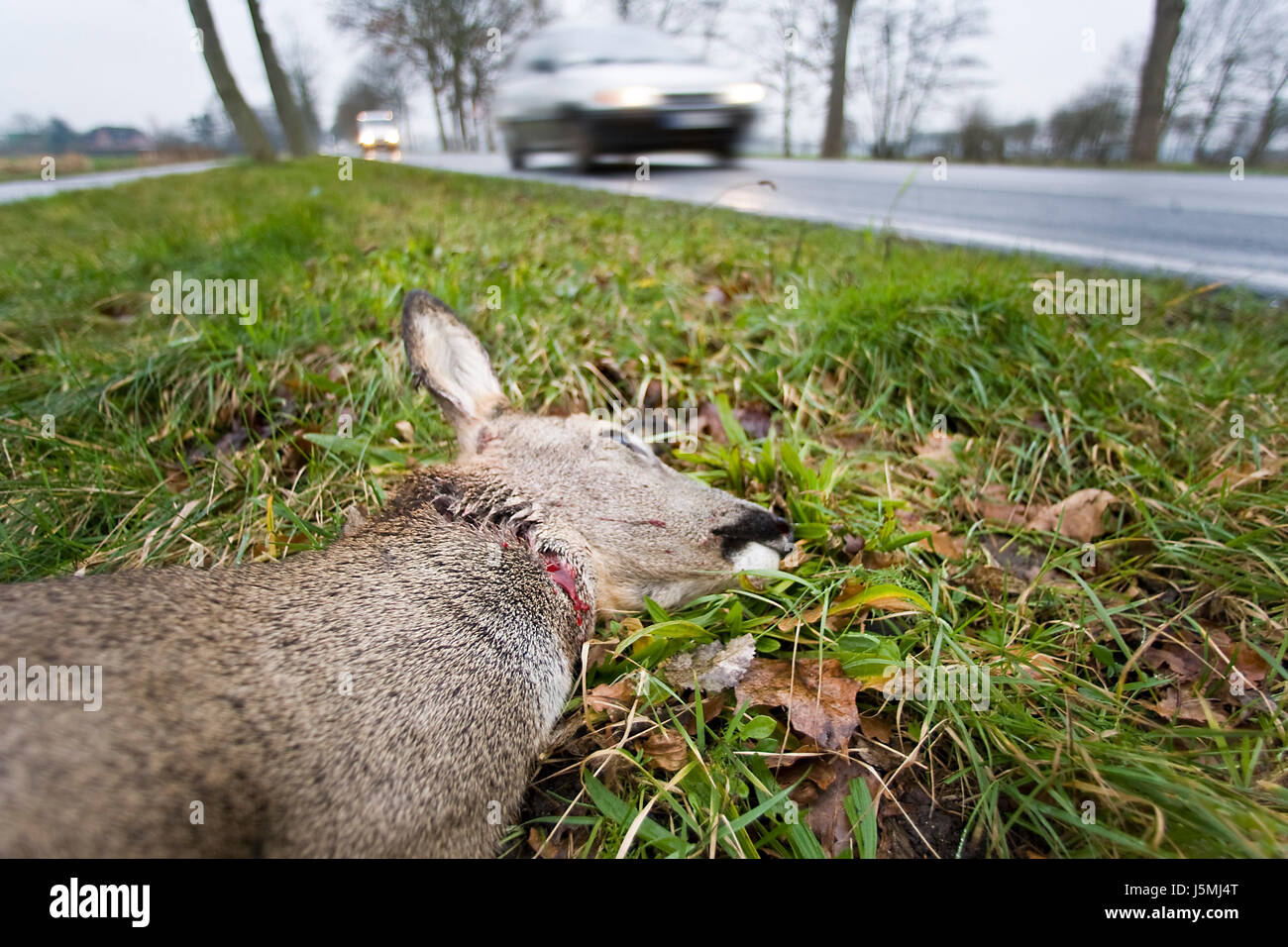 danger car automobile vehicle means of travel motor vehicle accident traffic Stock Photo