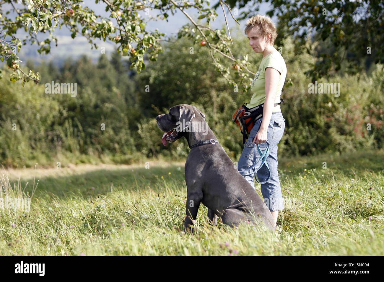 german mastiff dog sitting with wife - Stock Image