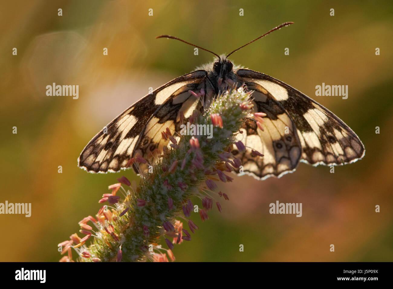 shine shines bright lucent light serene luminous macro close-up macro admission - Stock Image