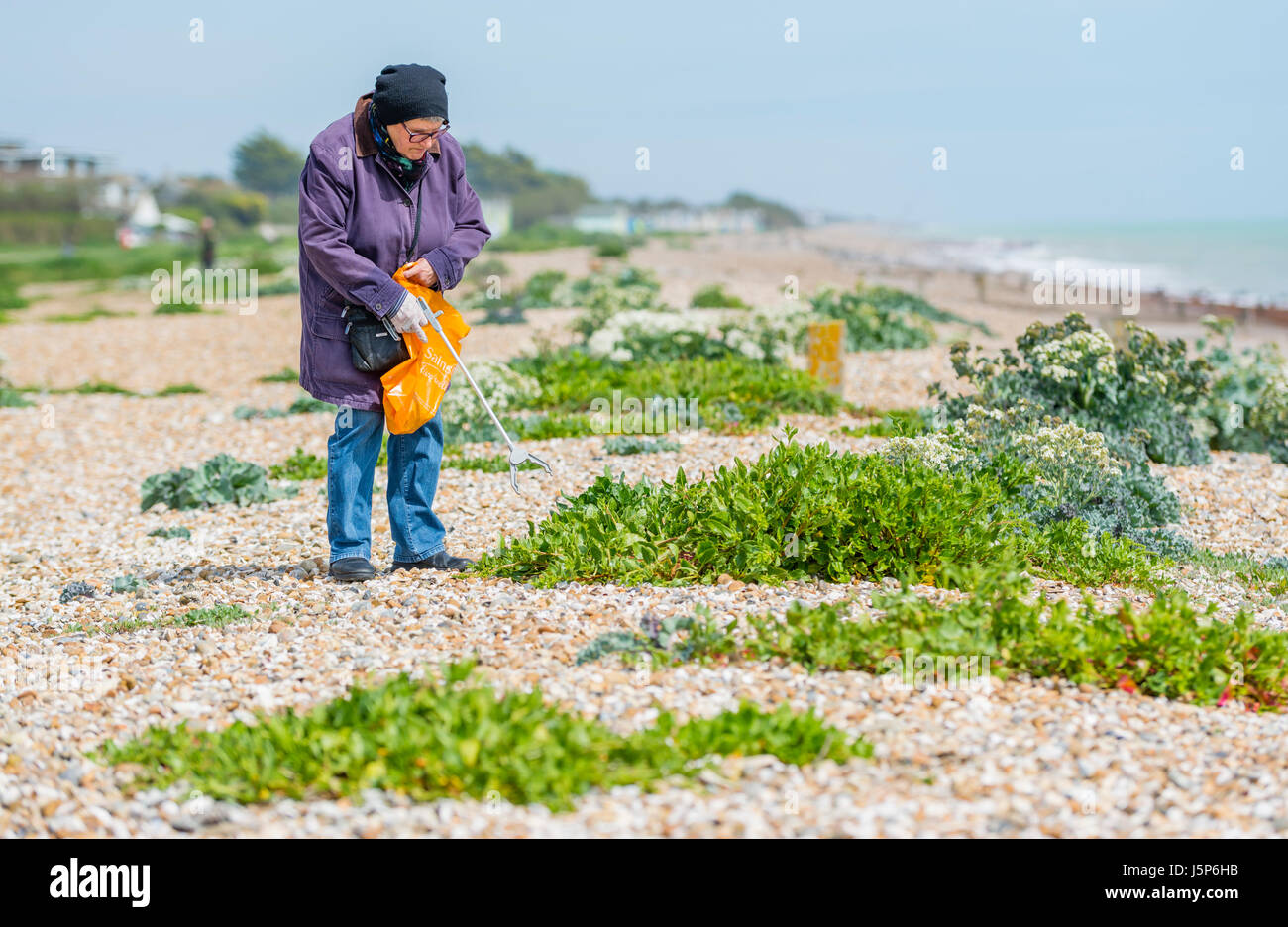 Elderly lady being community spirited by cleaning up the litter people have left behind on the beach. - Stock Image