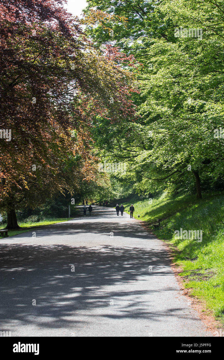 Leeds, UK. 18th May, 2017. People enjoying a morning work around Roundhay Park in Leeds on 18 May 2017.  A bright - Stock Image