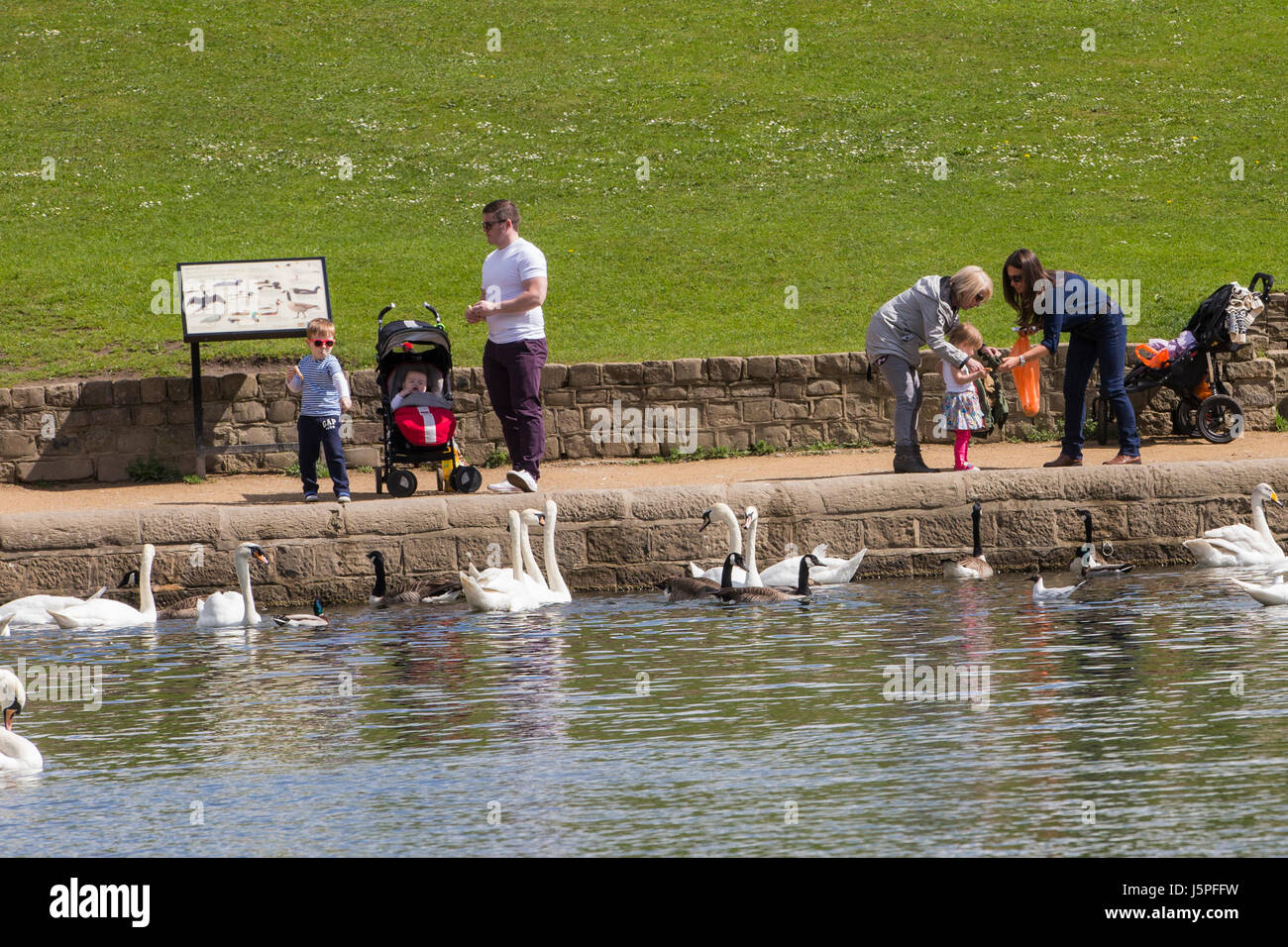 Leeds, UK. 18th May, 2017. Children feeding the ducks and swans at Roundhay Park in Leeds on 18 May 2017.  A bright - Stock Image