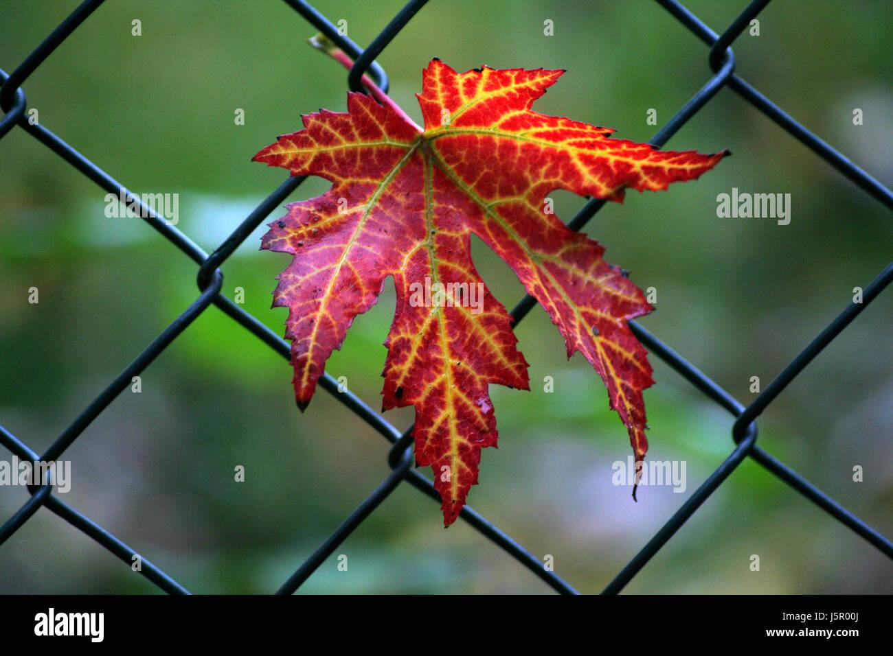 entanglement - Stock Image