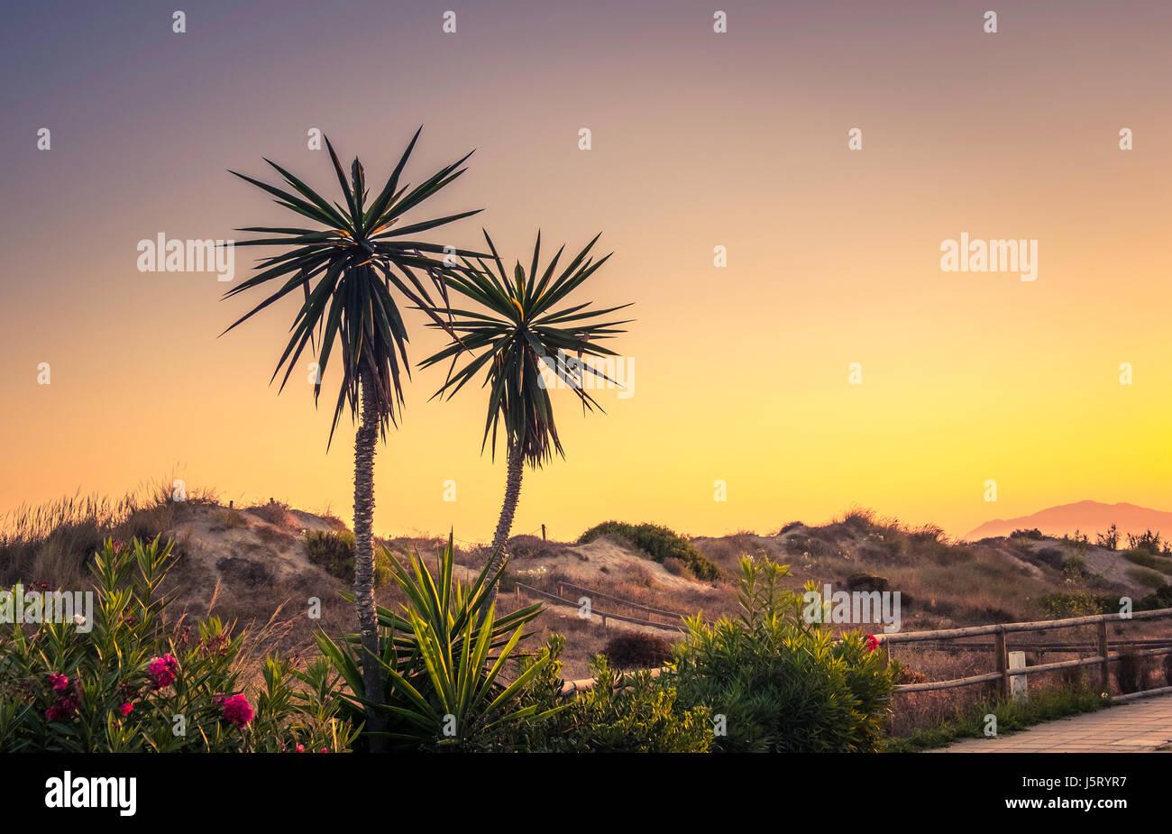 Early morning sunrise in Elviria, Marbella, Spain. - Stock Image