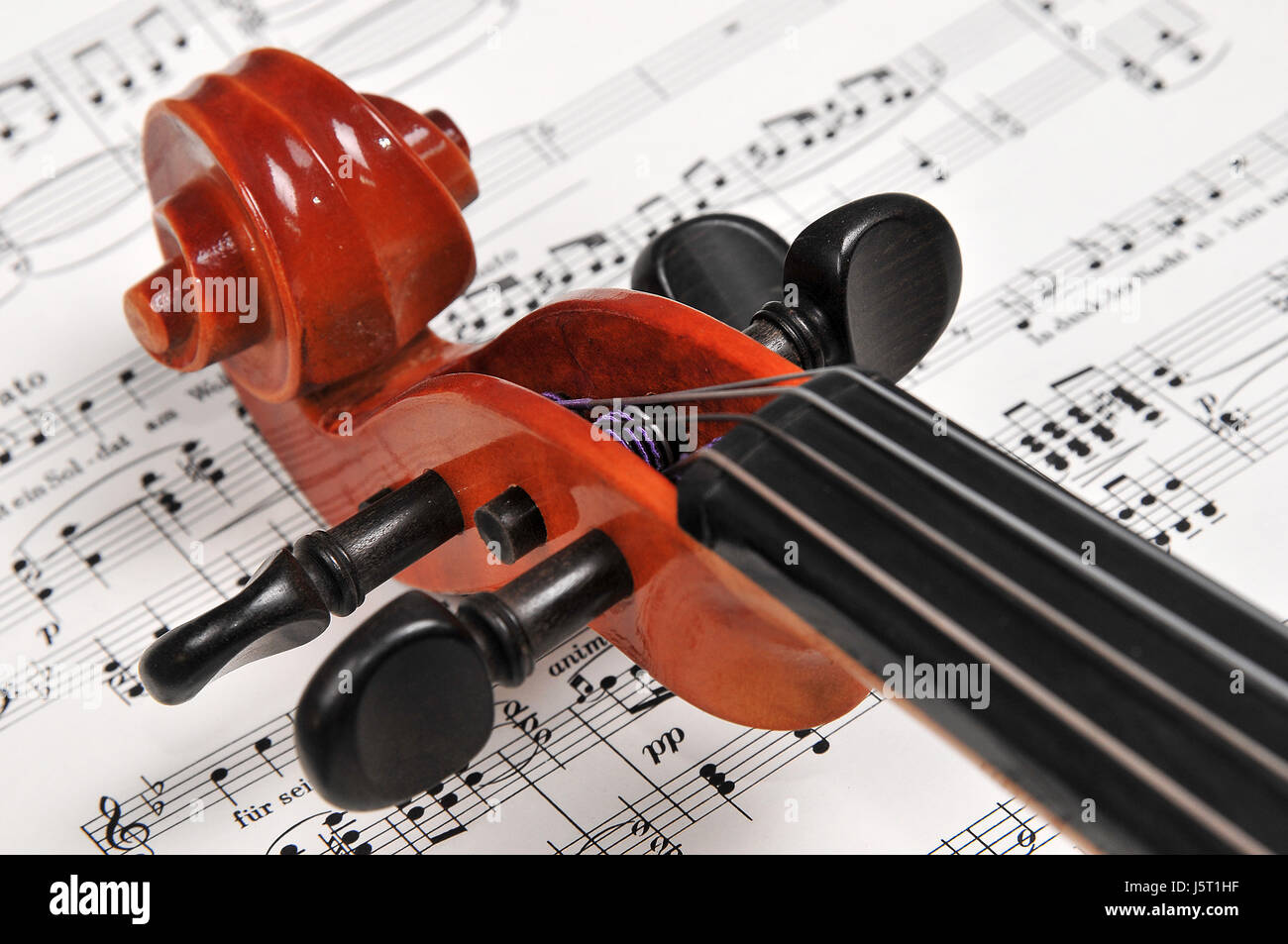 music musical instrument snail violin bowed instrument notes stringed - Stock Image