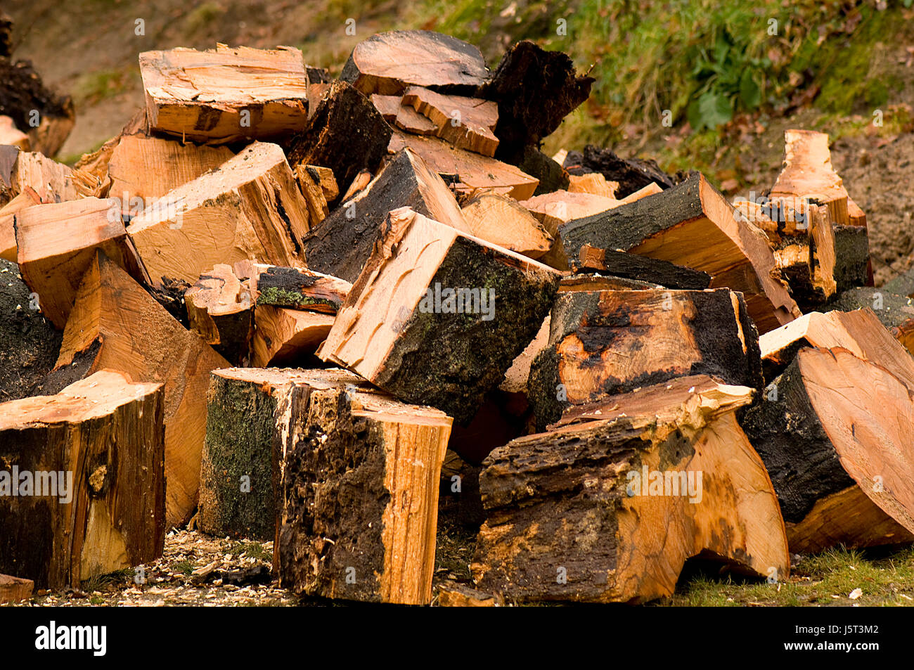wood parts dissected pieces tree wood drop hard saw beech hardwood