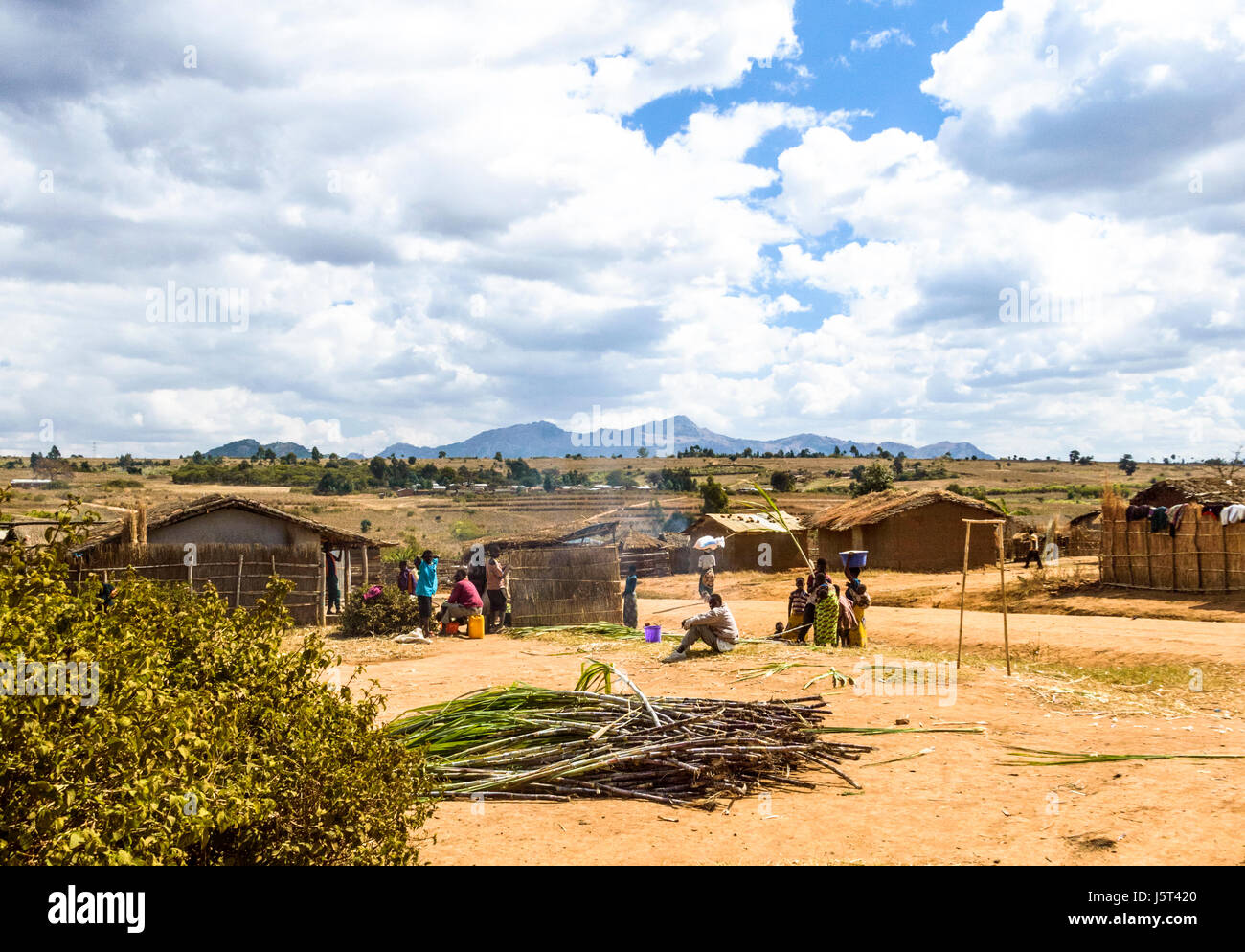 Sugar cane piled for sale in a rural village in Malawi, Africa - Stock Image