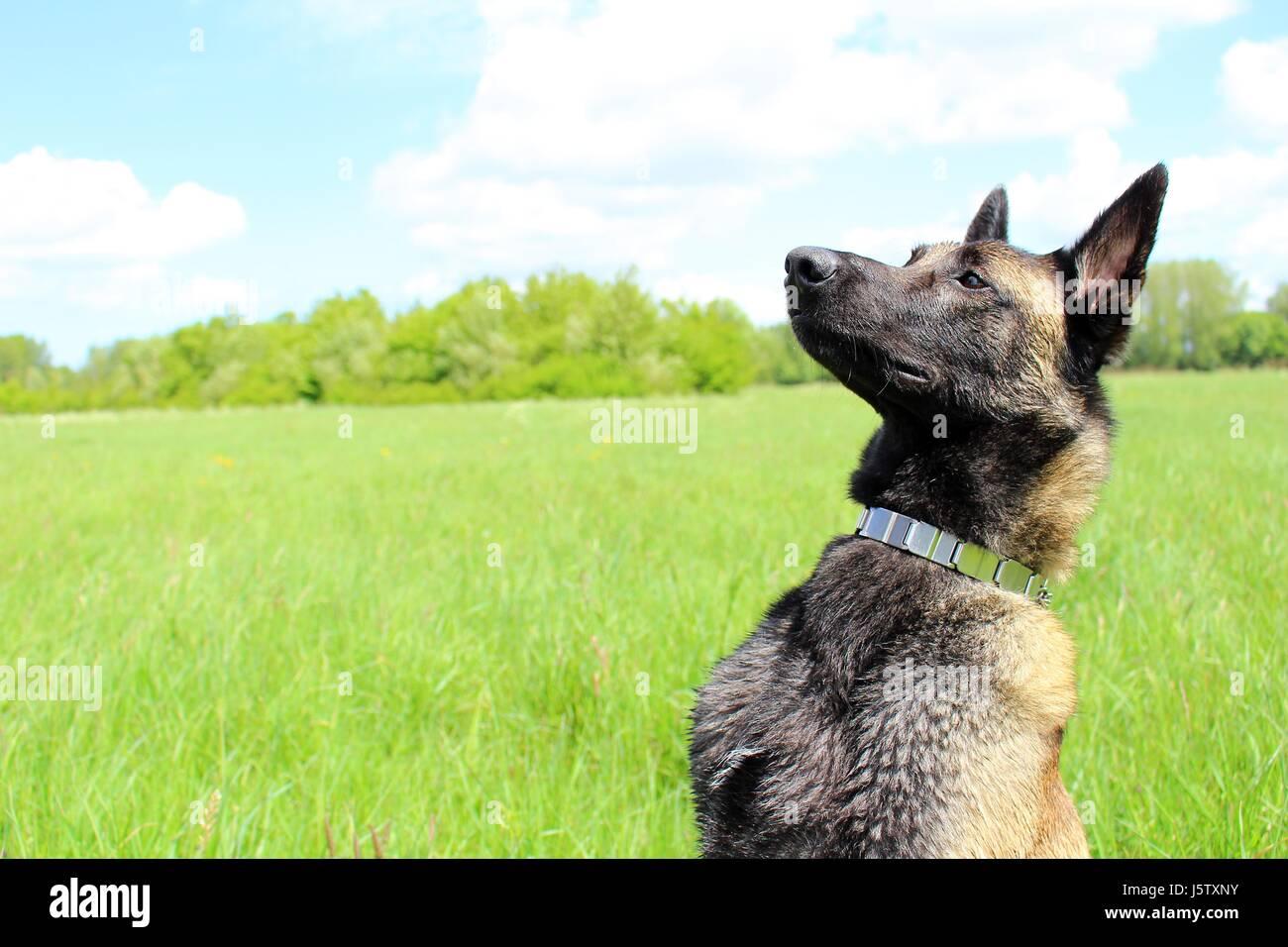 Army Dog Stock Photos & Army Dog Stock Images - Alamy