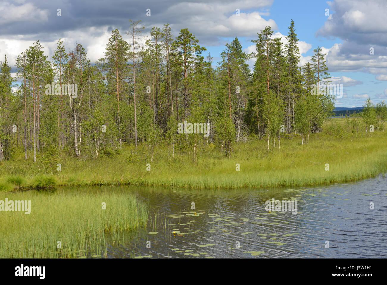 Northern landscape. Marshy shore. Finnish Lapland - Stock Image