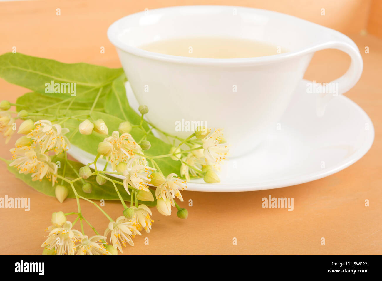 Studio shot of hot linden tea in a fine white porcelain cup on a wooden tabletop. Large-leaved Linden, Tilia platyphyllos. Stock Photo