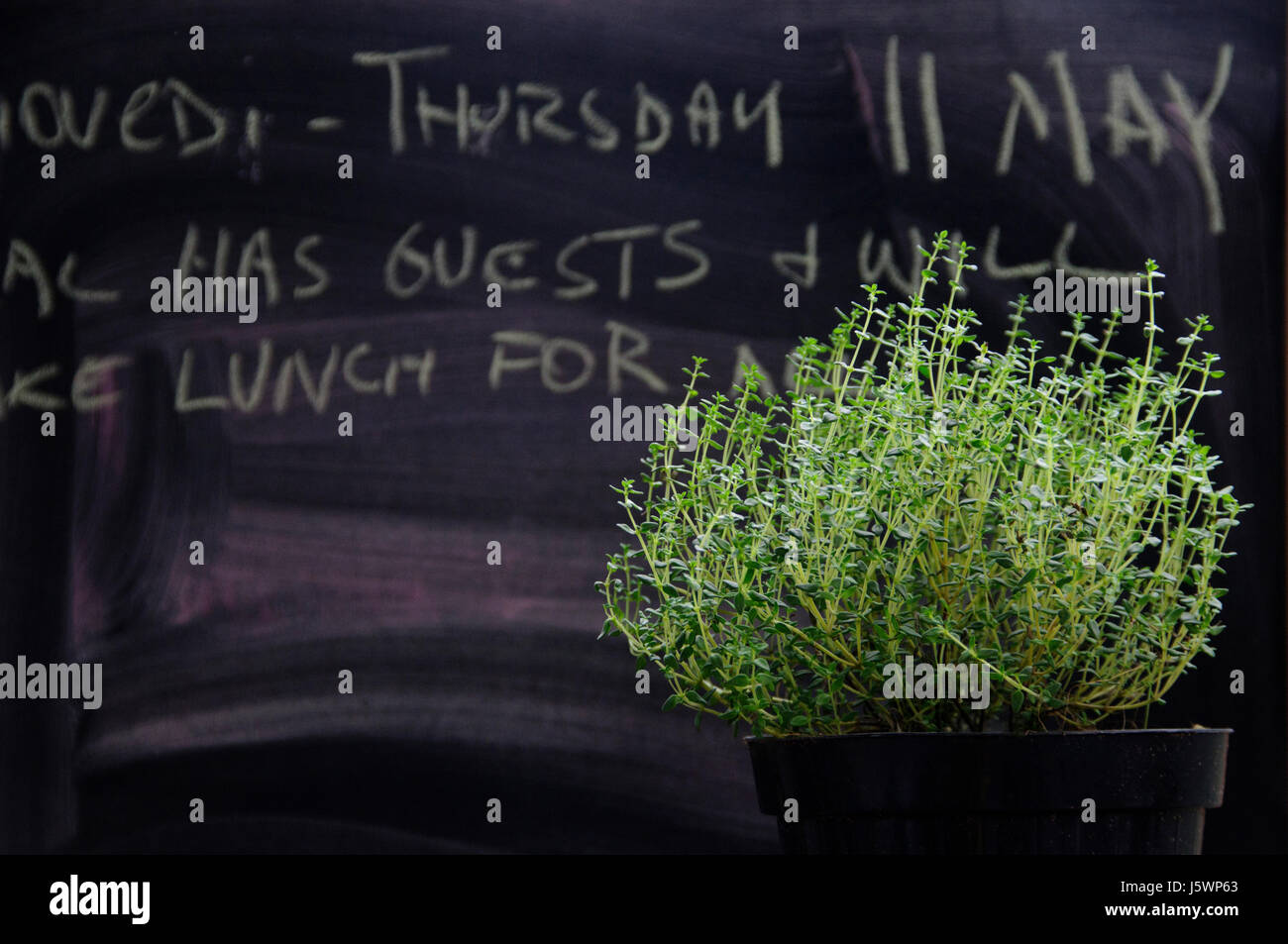 A thyme pot with background blackboard with lunch invitation. - Stock Image