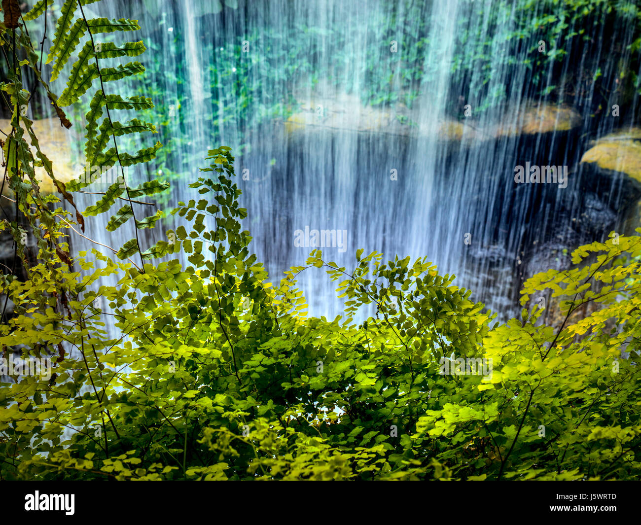 Waterfall in lush tropical garden situation - Stock Image