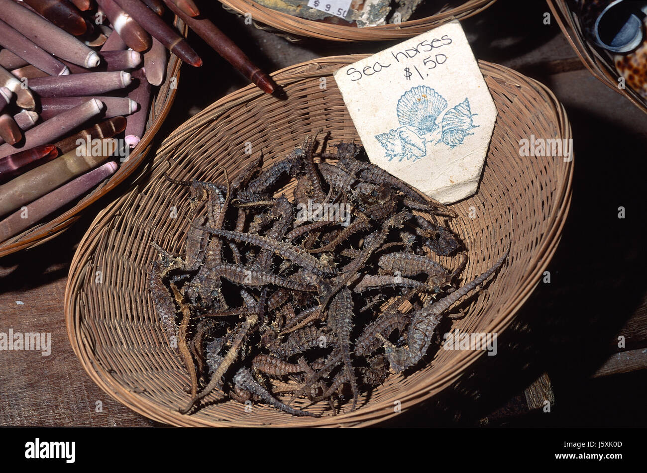 Dried seahorses for sale in curio shop Stock Photo: 141341885 - Alamy