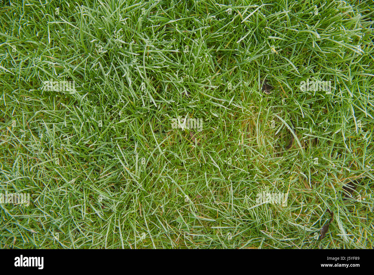 blades of grass lawn plan above view - Stock Image