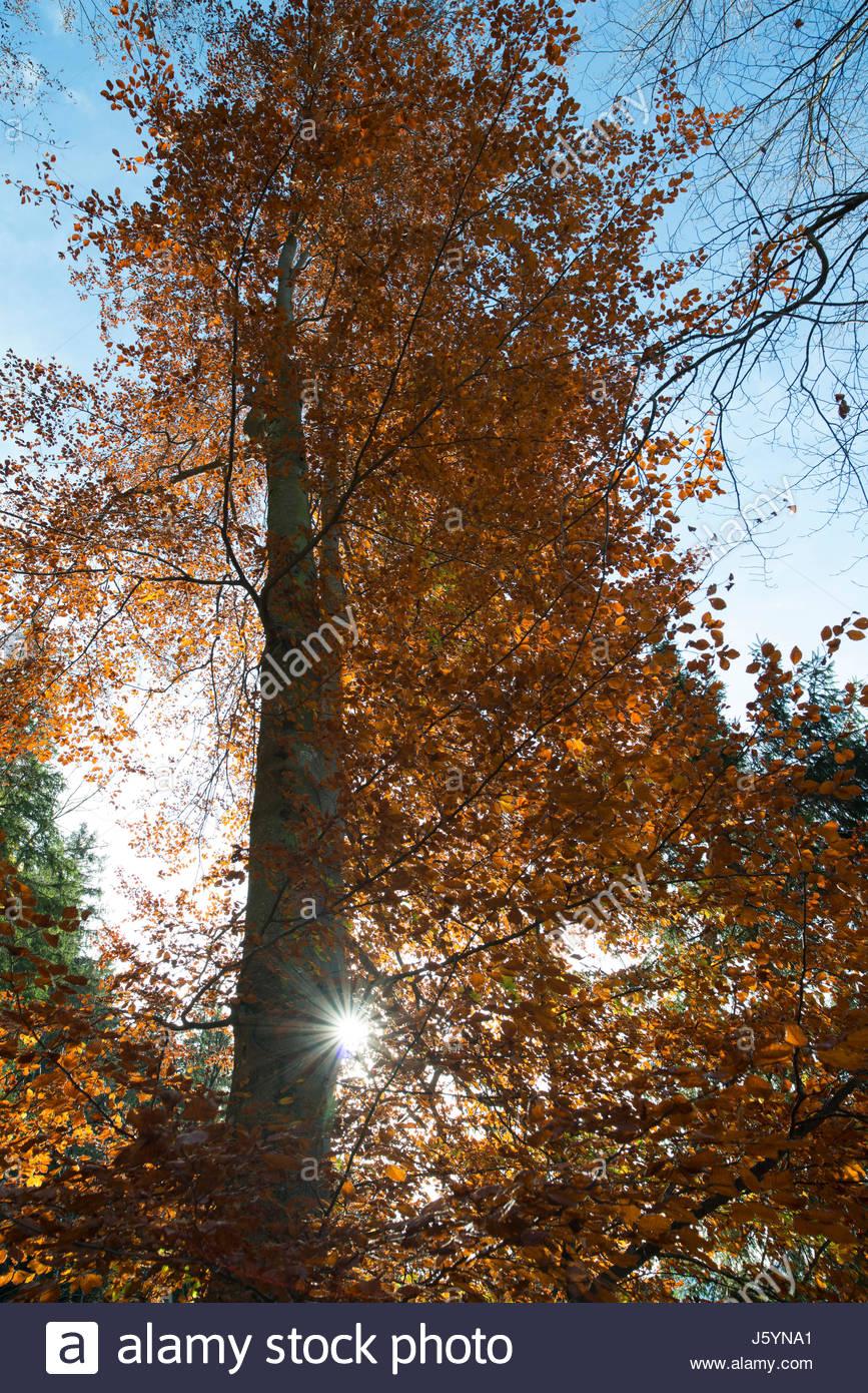 Herbst am Winterzugweg beim Alpsee, Füssen, Bayern, Deutschland. Autumn on Winterzugweg near Alpsee, Füssen - Stock Image