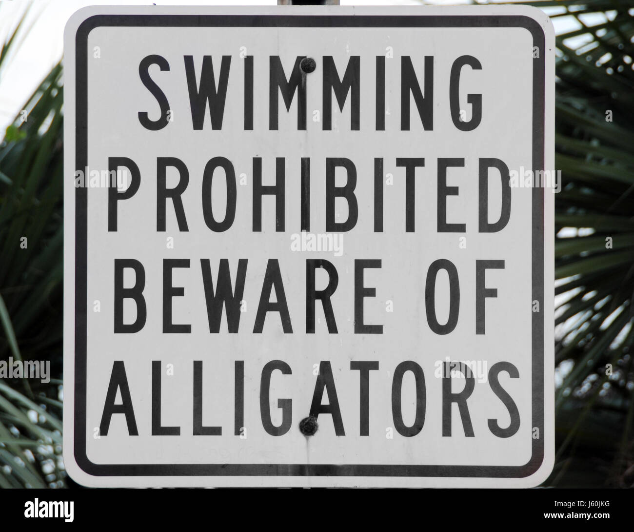 sign signal crocodile alligator hint pointing swimming swiming swim swims to do - Stock Image