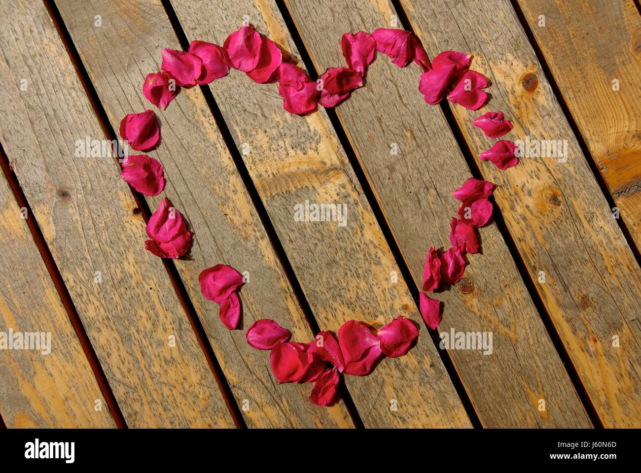 flower rose plant wood embassy love in love fell in love hand heart red - Stock Image
