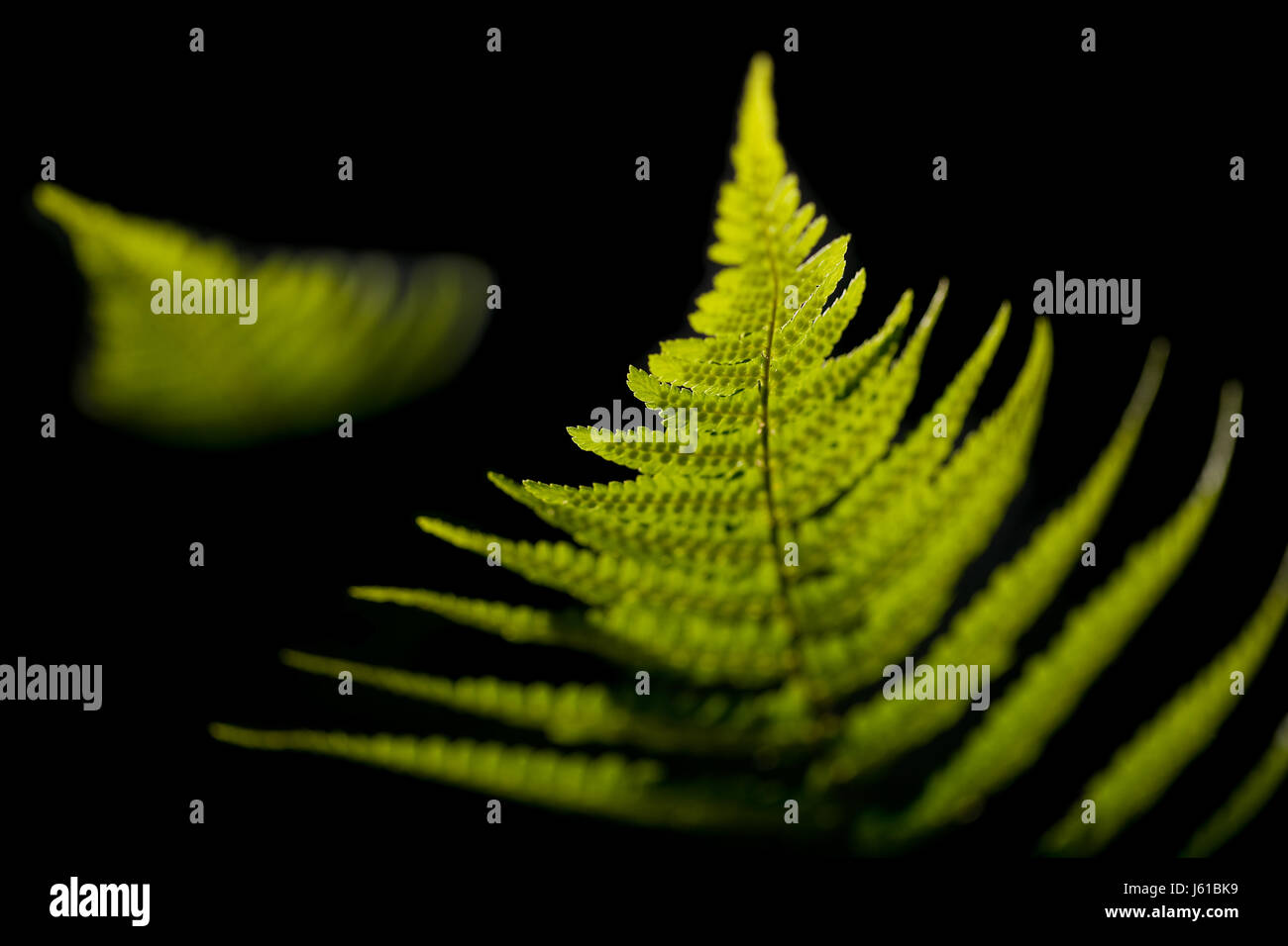abstracted light - Stock Image