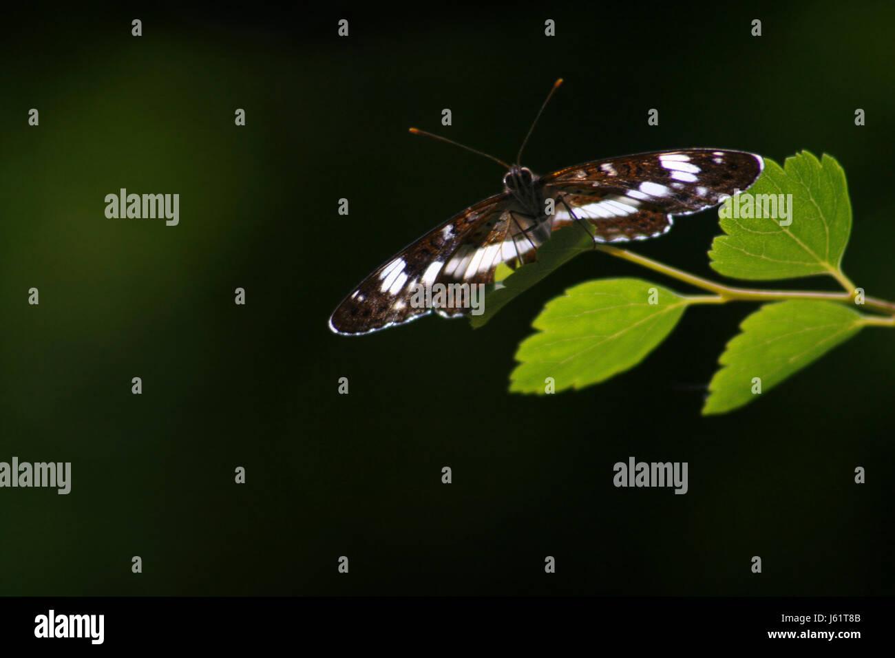 backlit - Stock Image