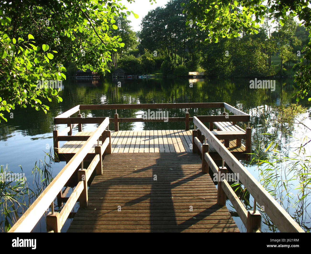 shine shines bright lucent light serene luminous tree trees wood bridge Stock Photo