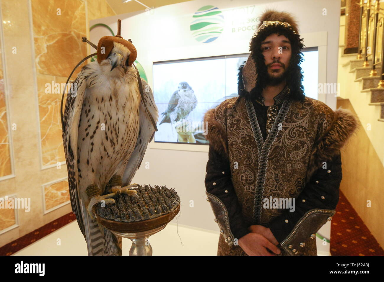"""Kazan, Russia. 19th May, 2017. A falcon and a falconer seen at the 9th International Economic Summit titled """"Russia - Stock Image"""