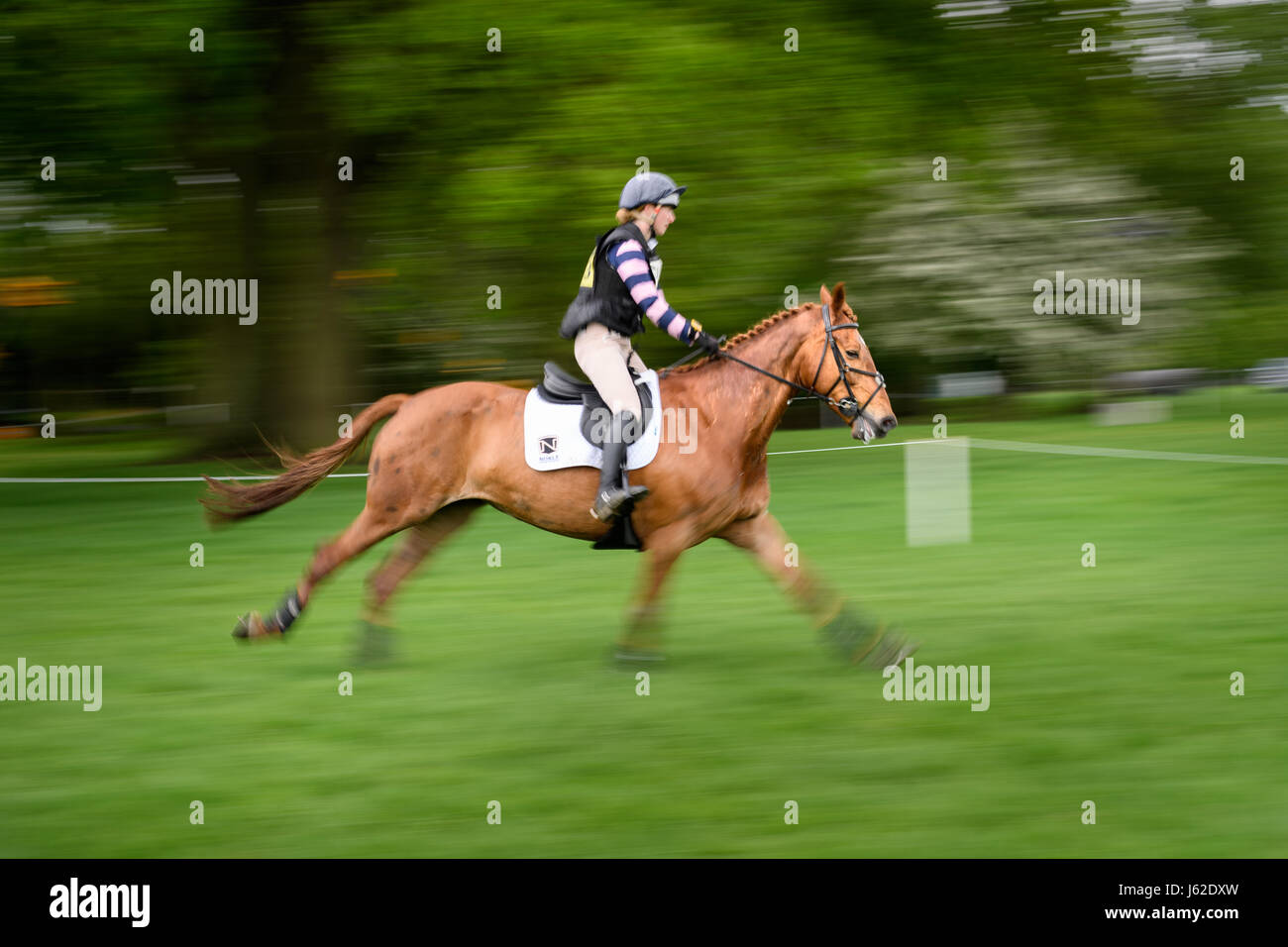 Rockingham Castle grounds, Corby, England. 19th May 2017.  Greta Mason and her horse Ballyard Caitriona gallop past Stock Photo