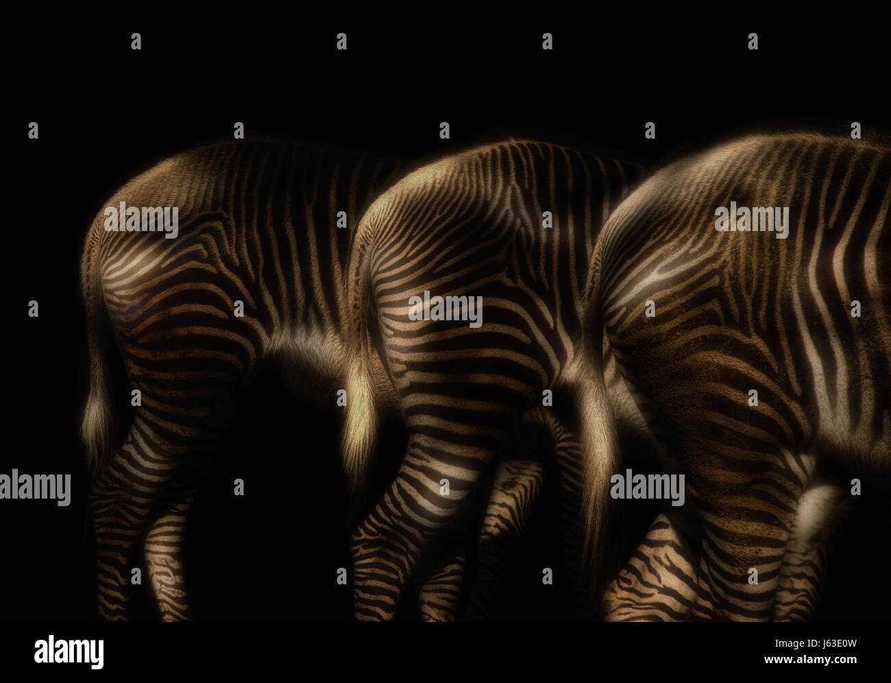 zebras in lights glow - light painting - Stock Image