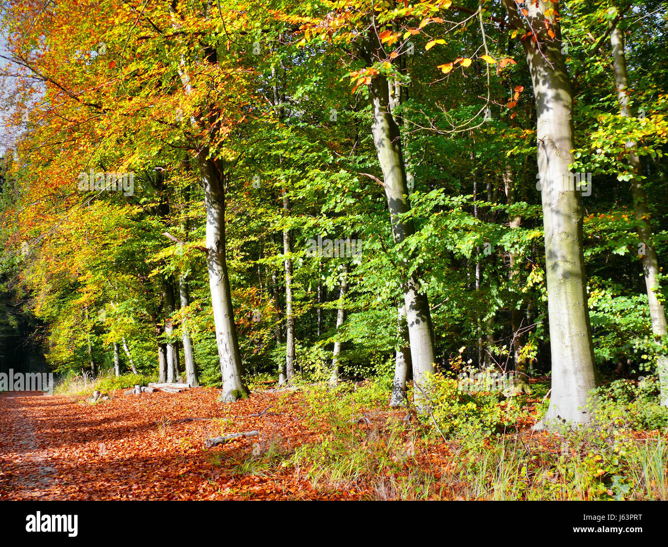 leaf colour autumnal location shot leaves foliage nature fall autumn ...
