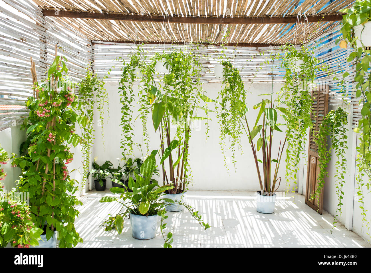Garden on balcony with green plants at home. - Stock Image