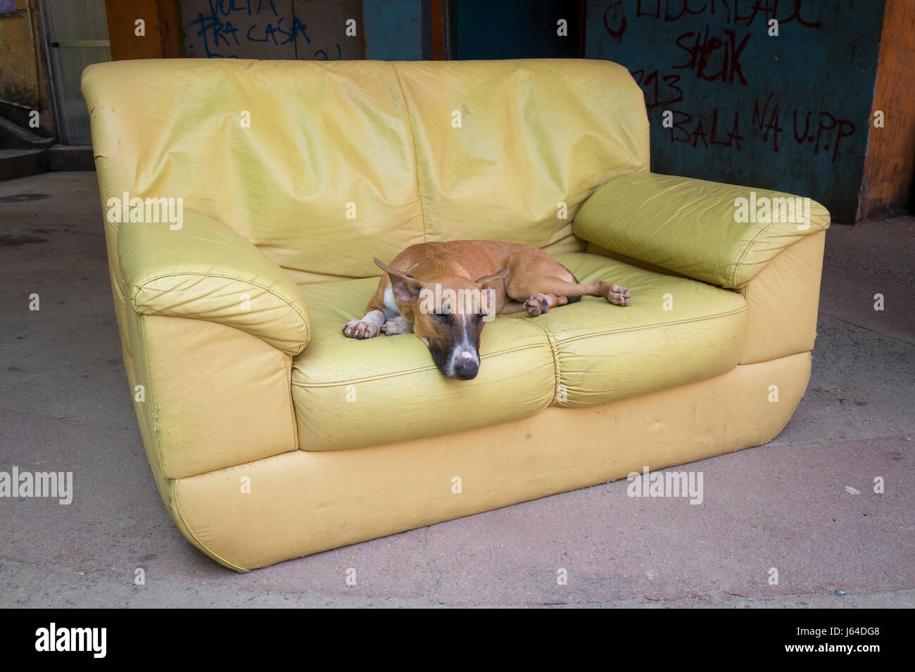 A bull terrier dog resting in a yellow sofa outdoors in the Santa Marta Community favela in Rio de Janeiro, Brazil - Stock Image
