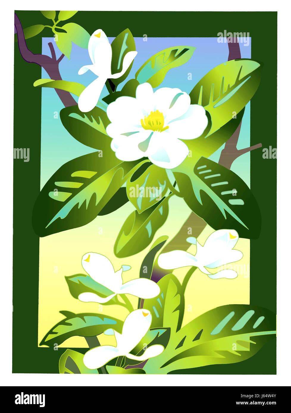 White apple blossoms - Stock Image