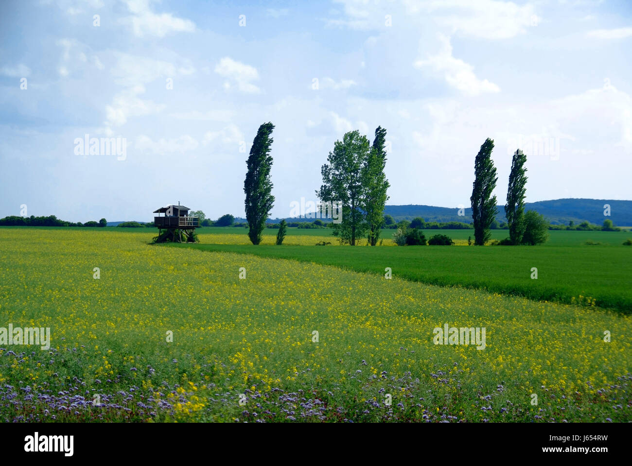 austrians freedom liberty border agreement hungary watching observe watch plant Stock Photo