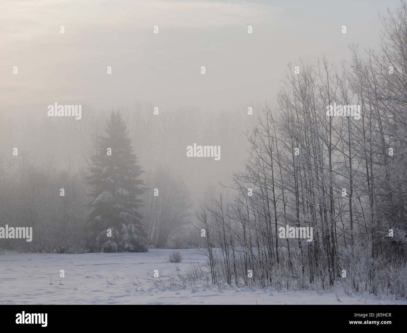 Forest landscape in fog, Prince George, British Columbia, Canada - Stock Image