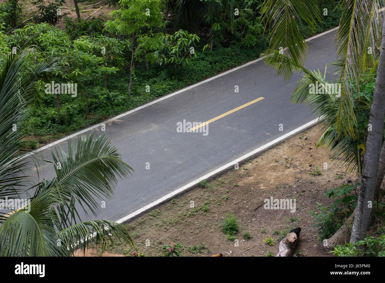 Asphalt road in a dense tropical forest with gleams view from above - Stock Image