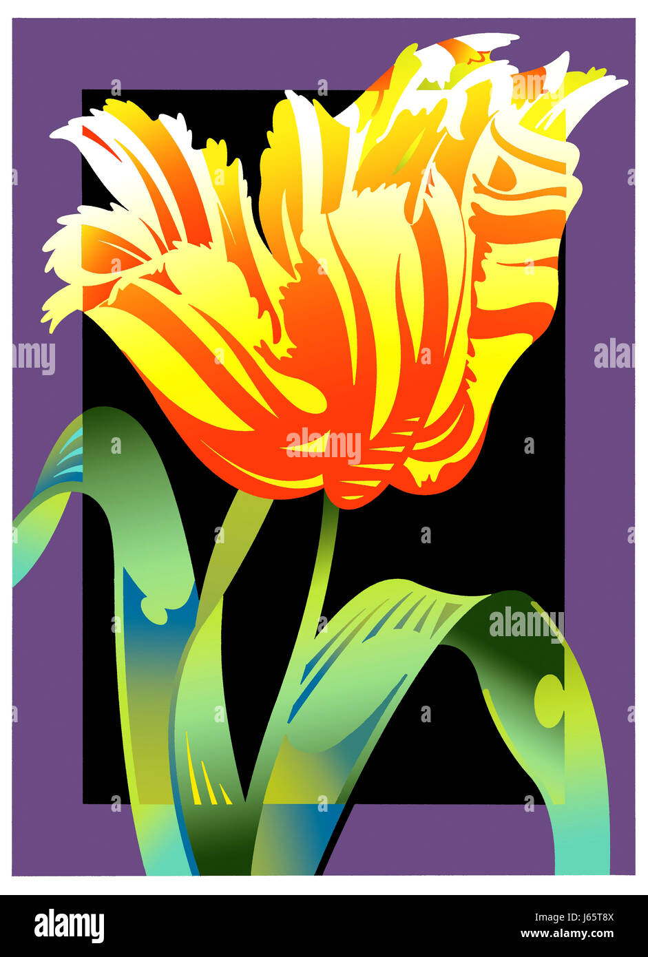 Close up of tulip flower on colored background - Stock Image