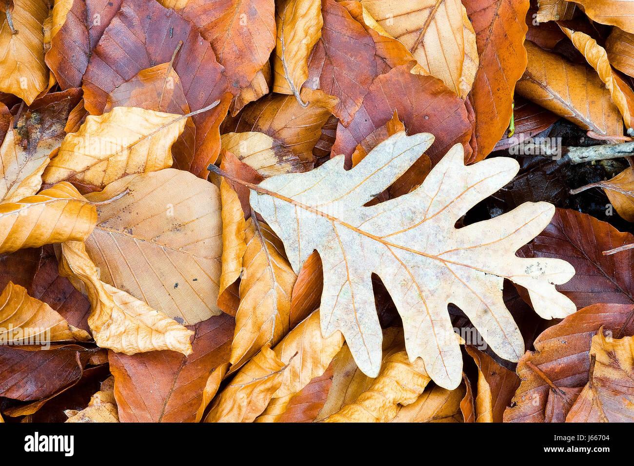 leaves spain backdrop background foliage fall autumn composition season textura - Stock Image