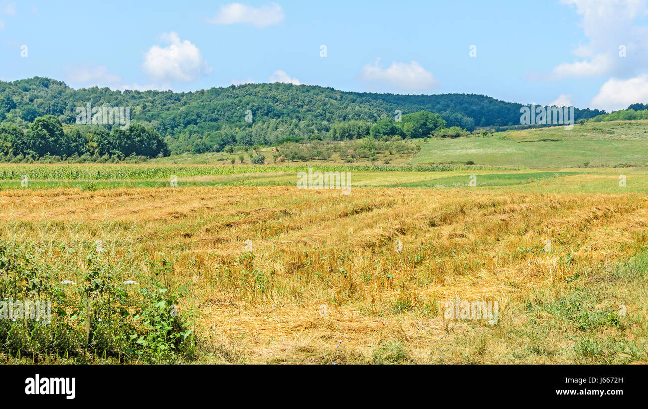 Valcea Stock Photos Amp Valcea Stock Images Alamy